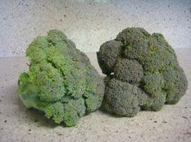 Belstar Broccoli